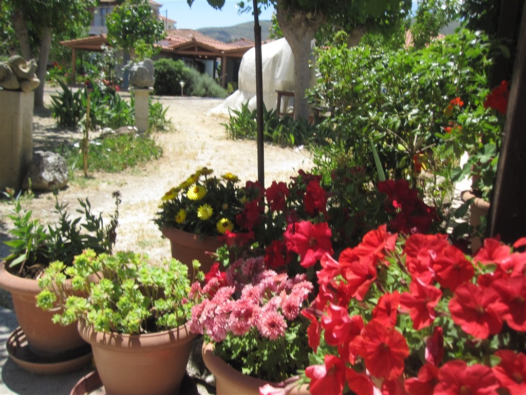 Holiday house FERIENANLAGE BEATE APARTMENT (1022223), Agios Leon, Zakynthos, Ionian Islands, Greece, picture 6