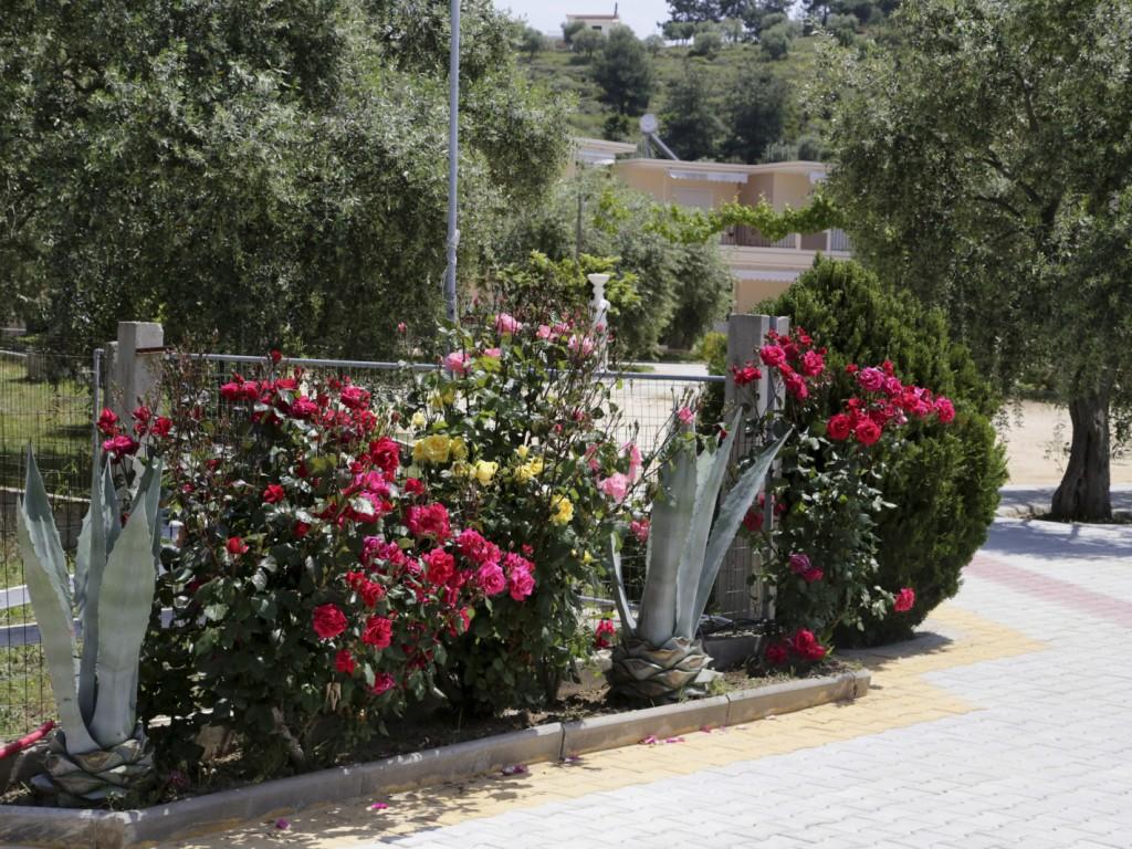 Ferienwohnung Potos Residence   Studio (982849), Potos, Thassos, Ägäische Inseln, Griechenland, Bild 11
