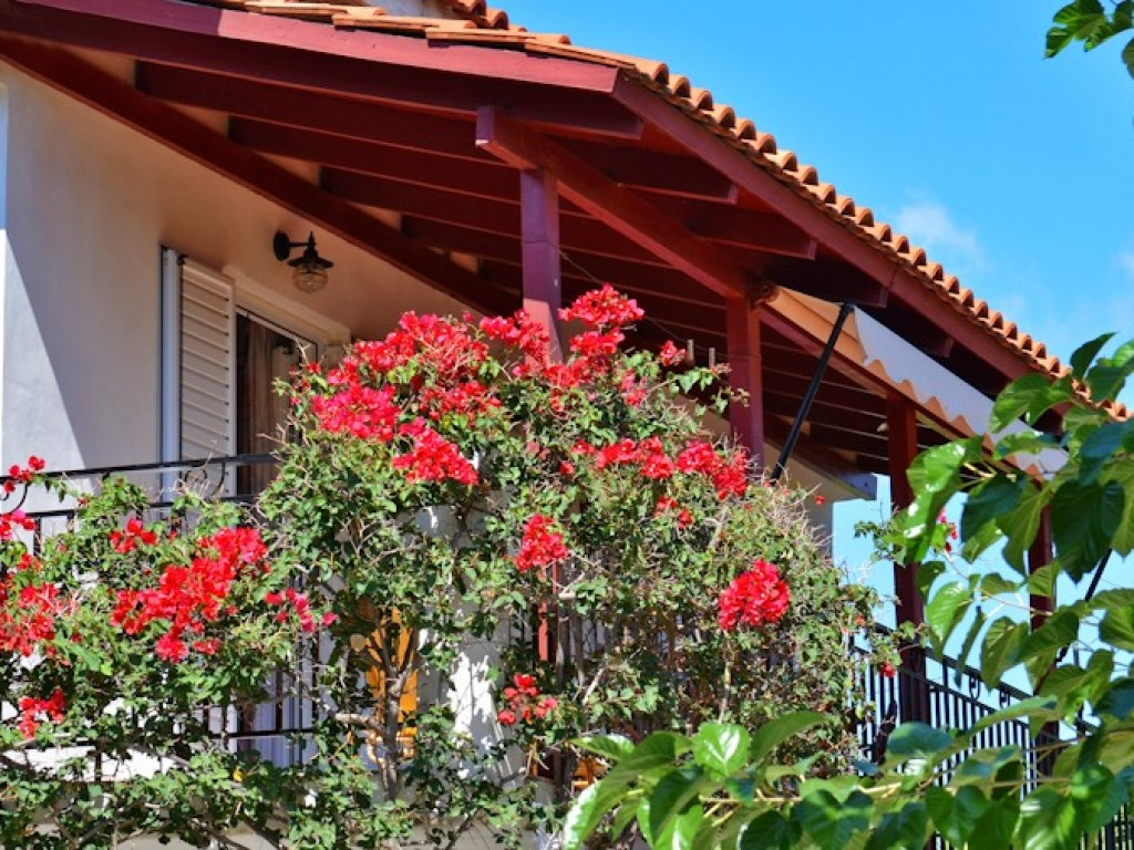 Holiday apartment LEMON   3 ROOMS APARTMENT (1016846), Agios Leon, Zakynthos, Ionian Islands, Greece, picture 16